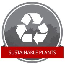 Sustainable Plants